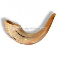 Classical Rams Horn Shofar, polished - Size D