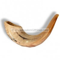 Classical Rams Horn Shofar, polished - Size B