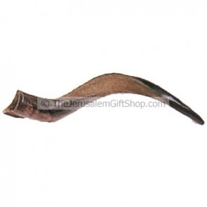 The Mini Yemenite Shofar polished