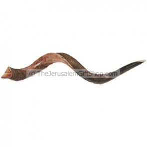 Jumbo Yemenite Shofar polished